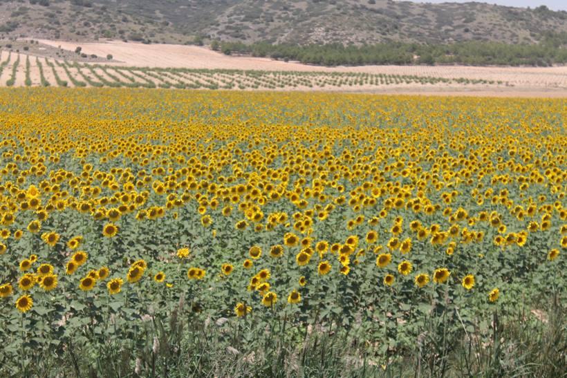 Bellas llanuras en Castilla La Mancha